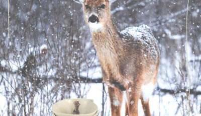 blog-1.-Advent-reh-im-schnee-my-deer-illustrated-ceramics